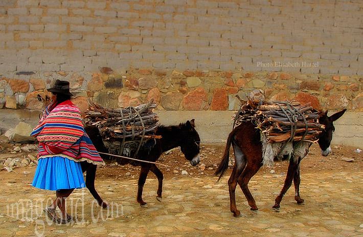 Femme conduisant ses ânes chargés de bois pour la cuisson des aliments,  Altiplano de Bolivie