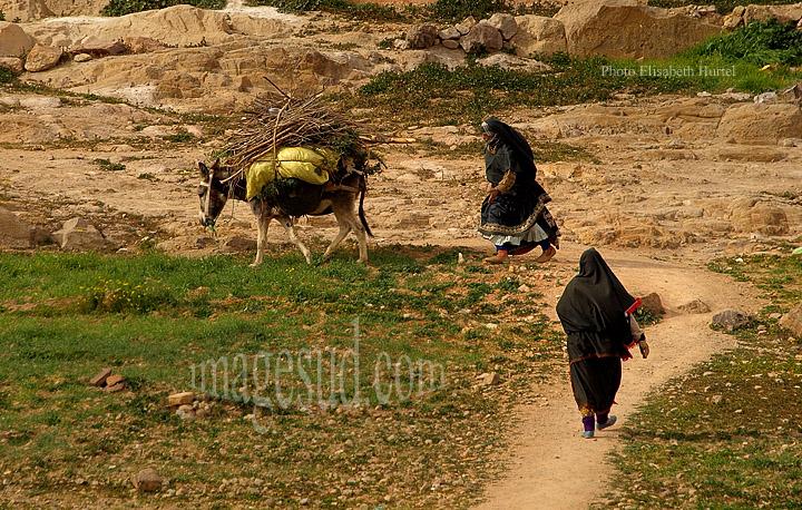 Femmes ramenant des fagots de bois sur l'âne, Sud Maroc, Afrique