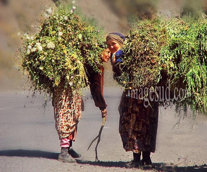 Portage traditionnel, travail des femmes: femmes berbères portant du fourrage sur leur dos, Maroc, Atlas