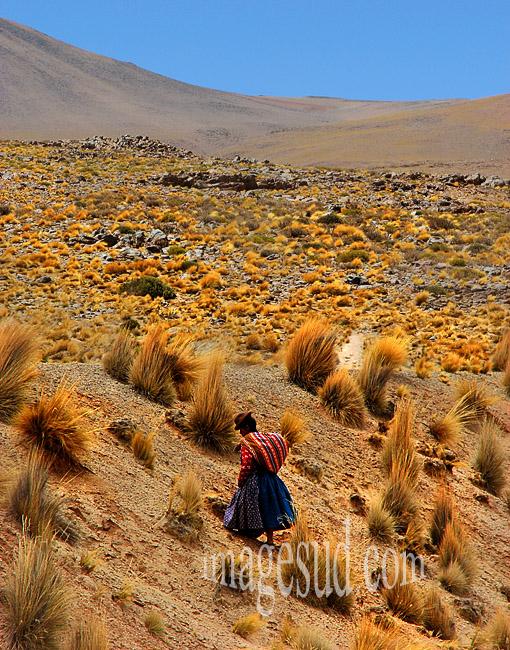 Travail des femmes : femme de l'altiplano  des Andes