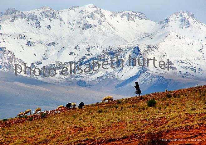 Bergère filant en gardant ses moutons, Andes, Bolivie