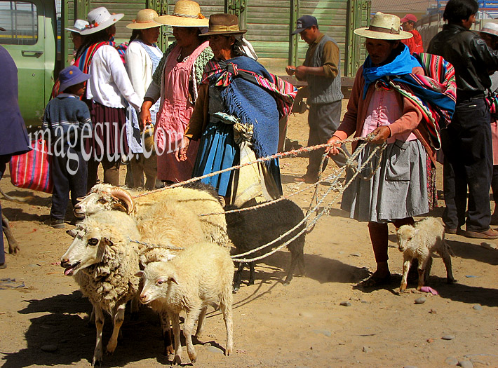 Femme des Andes avec ses moutons en laisse, un jour de marché aux bestiaux