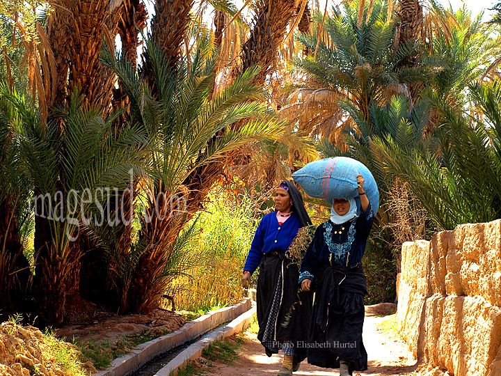 Femmes au retour des champs dans une oasis du sud Maroc