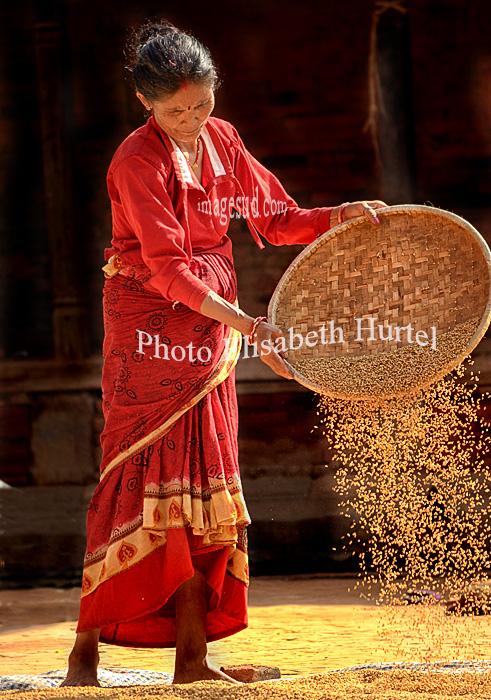 Femme vannant le riz, récolte du paddy au Népal
