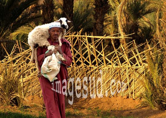 Berger portant un mouton, sud Maroc, vie quotidienne, agriculture, élevage au Maroc