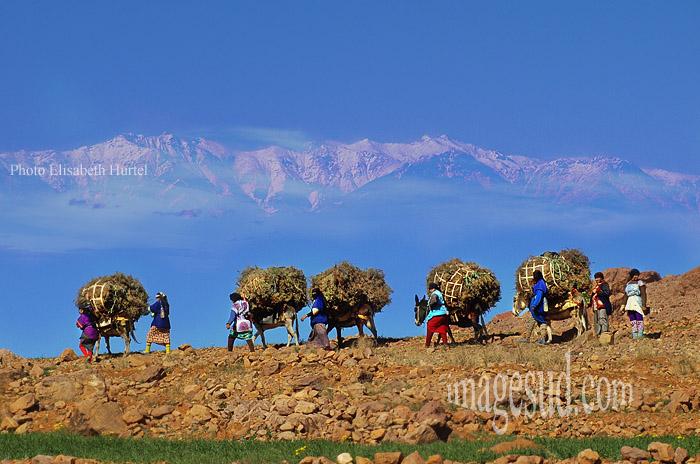 Maroc : caravane, Anti-Atlas
