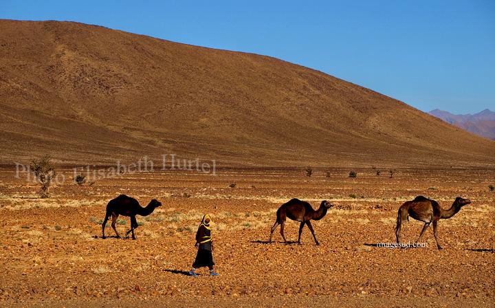 Femme et ses dromadaires dans le désert, Sahara