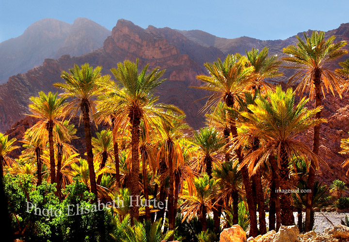 Palmeraie en contre-jour, Maroc