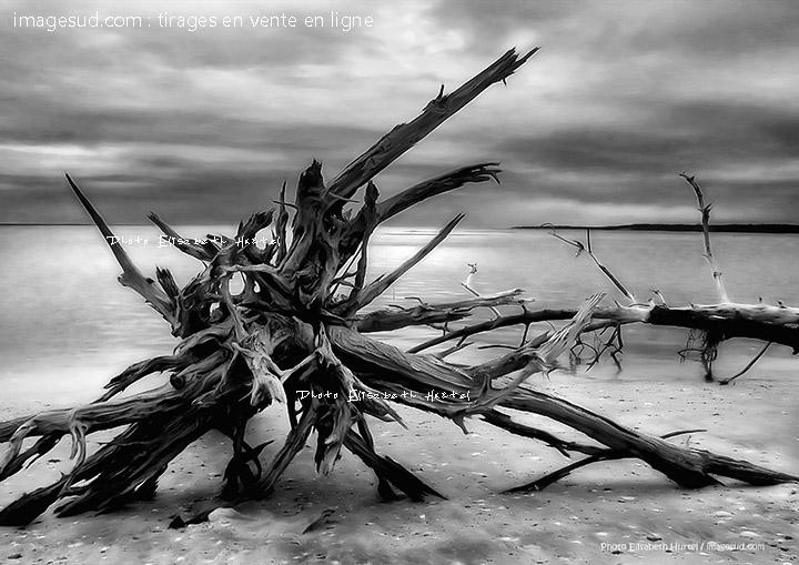 Plage sauvage d'Océanie, photo art noir et blanc