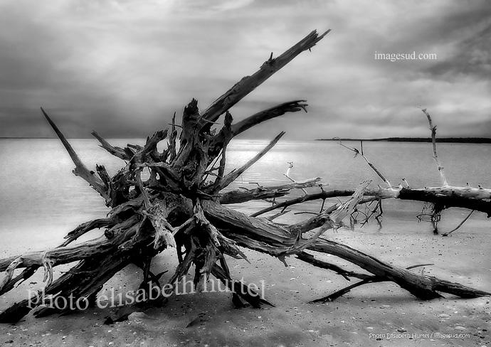 Plage d'Océanie, photo d'art noir et blanc, tirage d'art