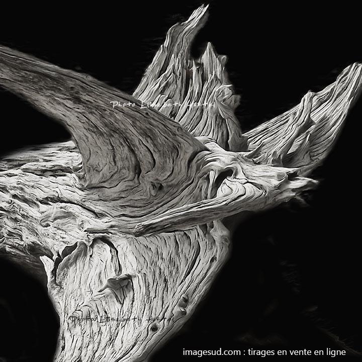 Bois flotté en forme d'oiseau : photo d'art en noir et blanc. Tirage en vente en ligne