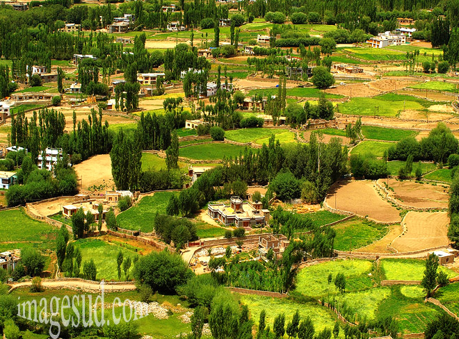 paysage-campagne-ladakh-p2-8128