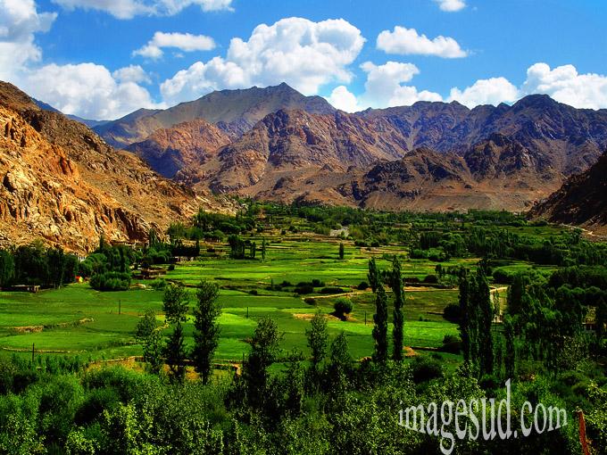 paysage-himalaya-ladakh-p2-6859