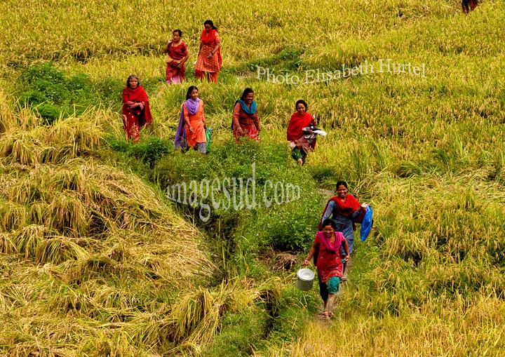 nepal-n6769