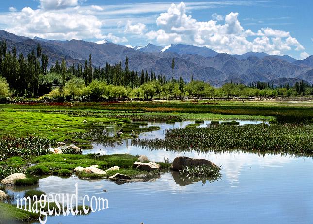 Paysage des bords de l'Indus, Ladakh, Himalaya